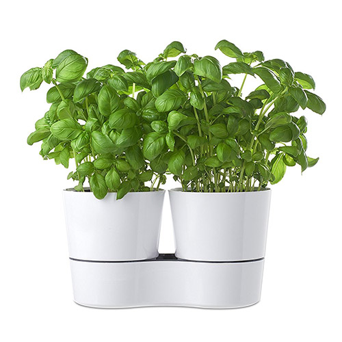 Hydro herb twin watering pots in white