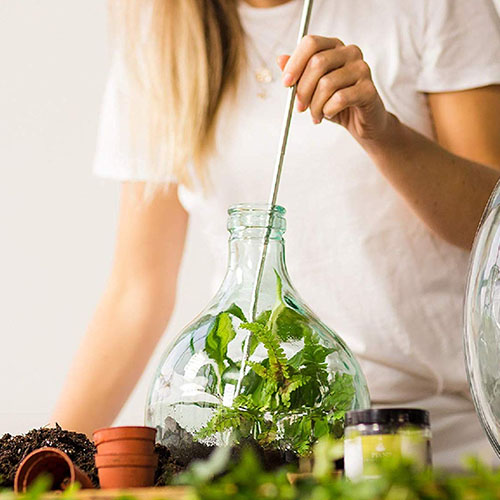 Terrarium Bottle Plant Starter Kit- 5L